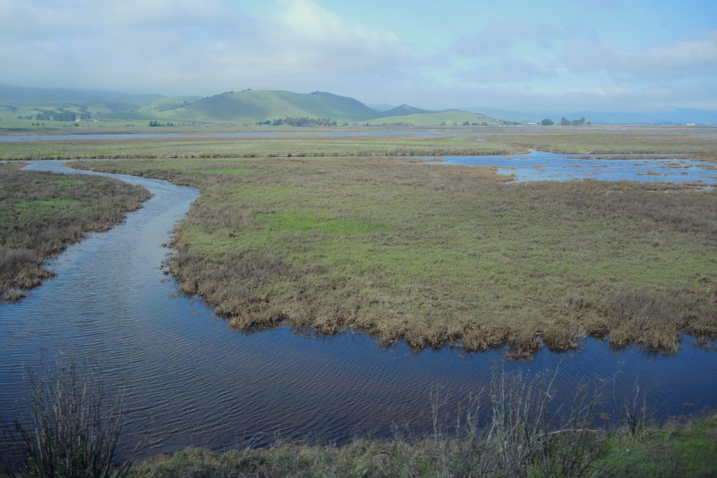 SJDelta-Marsh-FromAmtrak-20150217-crop